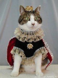 182-gatto_principe
